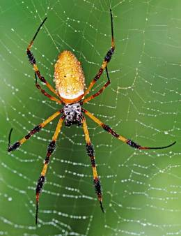spiderinweb